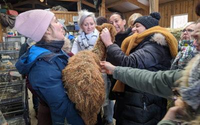 Lorsque l'agriculture sociale rencontre la médiation animale