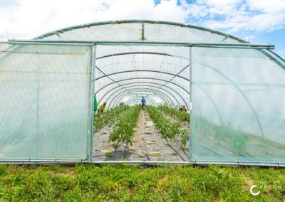 Ferme de la Grande Chevée - Agriculture sociale - Accueil Champêtre en Wallonie